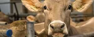 LK-NÖ drängt auf Ausnahmen bei Bioweide