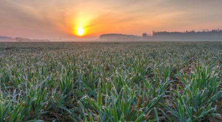 Fotosynthese doch steigerbar?