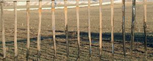 Agrarreferenten treiben Vorhaben voran