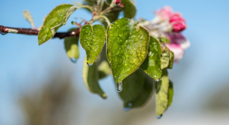 Steirische Obstbauern in Existenzängsten