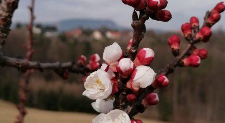 Obstbauern in Sorge wegen Wetterkapriolen