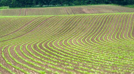 Mehr Zuckerrübenfläche  in Oberösterreich