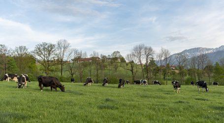 Kasseler Gruppe lobbyiert für Grasmilch