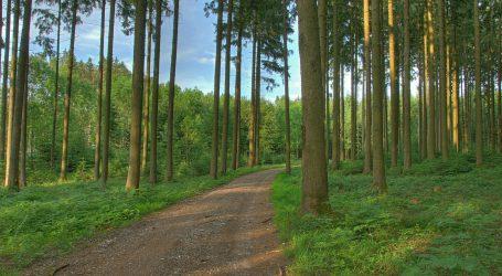 Dem Lebensraum Forststraße auf der Spur