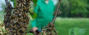 Bienenweiden anbieten und finden