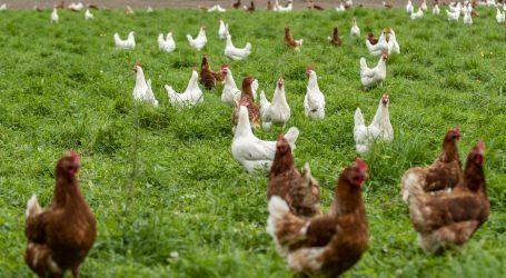 Tiergerechte Nutztierhaltung – aber sicher!