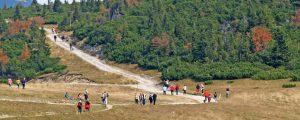 Urteil in Tiroler Kuhattacke hält