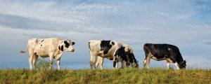 Im Einklang mit der Umwelt – Landwirte als Vorbild