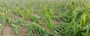 Schwere Agrarschäden in Kärnten durch Unwetter