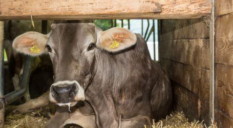 Gute Nachrichten vom Milchmarkt