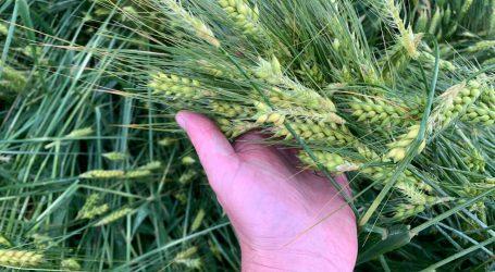 Fast 1 Mio. € Schaden für steirische Bauern