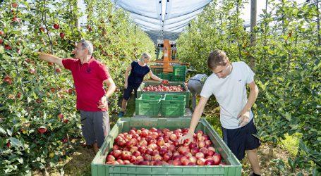 Hoher Bio-Anteil bei steirischer Apfelfläche