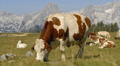 Land Tirol sponsert Alpung von Milchkühen