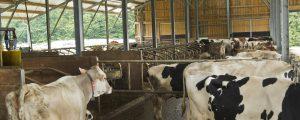 Auch 2019 Rückgang bei Milchbauern