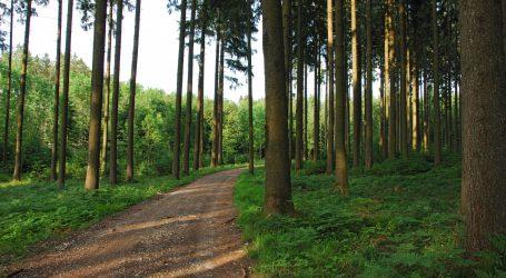Forststraßen biodiversitätsfördernd erhalten