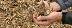 Waldverband verteidigt Holznutzung