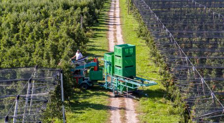 Saisonstart für heimische Tafeläpfel geglückt