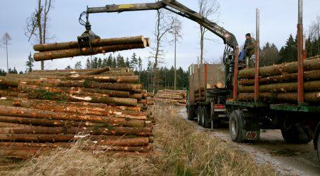 Holzaußenhandel über allen Wipfeln