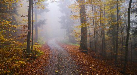 WWF Waldbericht als Grundlage für Grüne Waldpolitik