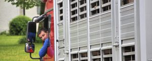 EU-Abgeordnete fordern kürzere Tiertransporte