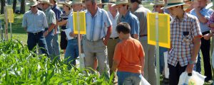 EU-Parlament fortgesetzt gegen GMO-Saatgut