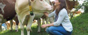 Berglandmilch pumpte 7 Mio. Euro ins Tierwohl