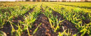 Biotech Aktien: In die Zukunft der Landwirtschaft investieren