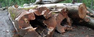 Saftige Strafen über heimische Holzkonzerne verhängt