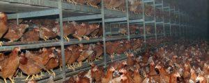 Eierproduzenten schwer von Gastrosperre getroffen