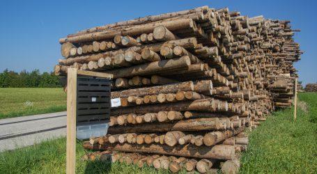 Klimaschutz verlangt Nutzung des Waldes