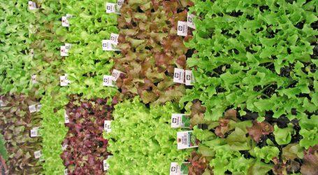 Vielstöckige Gemüseproduktionsanlage in Kopenhagen im Bau