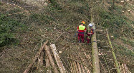 Ab Februar steht der Waldfonds zur Verfügung