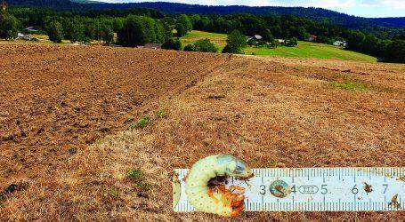 ÖKL Webinar über Engerlinge im Grünland