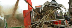Zu Unrecht wird energetische Holznutzung  kritisiert