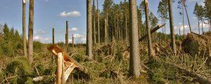 Schadholzereignis abgabenmindernd geltend machen