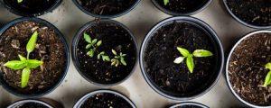 Garten: Tipps für die erste Aufzucht