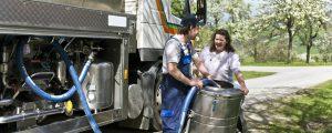 Reduzierte Anlieferung festigt Milchpreis