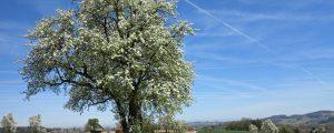 Obstbäume bei Biosphärenpark Wienerwald bestellen
