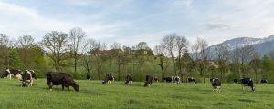UBV ventiliert Staatsvertrag für Bauern