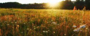 Land & Raum auf Extensivwiesentrip