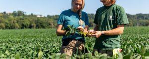 Heimischer Sojaanbau ausbaufähig