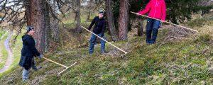 Landjugend bei mühsamer Wiesenpflege in Aktion