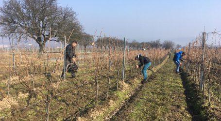 Sorge um Bestand der Weinbauschule Mistelbach