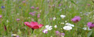 Bioverband setzt auf mehr Biodiversität