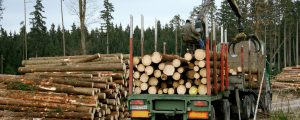Binnen 40 Sekunden wächst Holzhaus nach