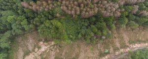 Wald nutzen, um Vielfalt zu fördern