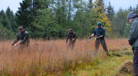 Forstschüler schwingen Sense im Moor